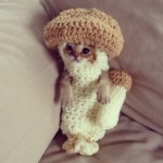 Mushroom Kitty in the Knitted Outfit